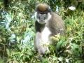 bale monkey.jpg