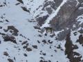 031-Snow-Leopard-Hemis-NP-Jonathan-Rossouw-2.jpg