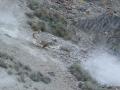 340-Leopard-Snow-Hemis-NP-India-AR-276.jpg