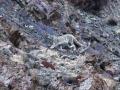 Ladakh-og-Chamabl-udvalgte-billeder-137-1024x755.jpg