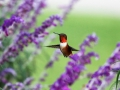 colibri low.jpg