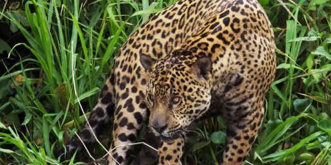 Amazzonia e Pantanal