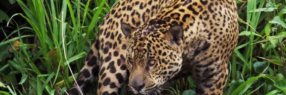 Amazon and Pantanal