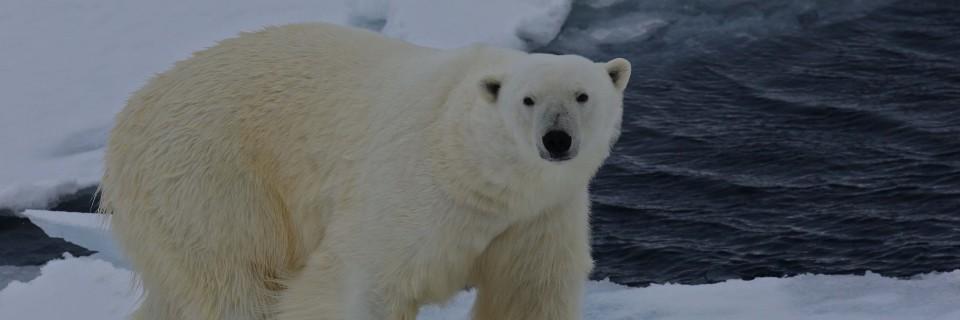 Svalbard – Paradiso artico