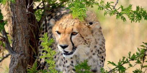Le pianure del Serengeti