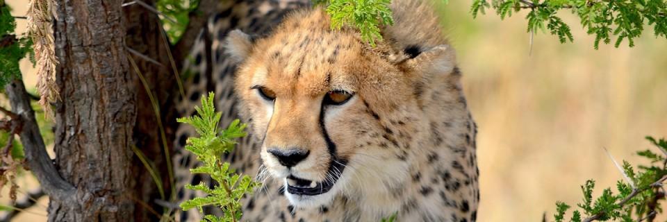 The Plains of Serengeti
